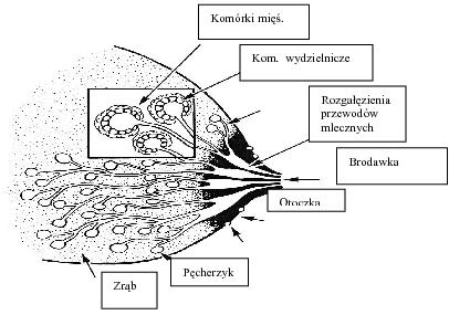 jakpowstajepokarm1